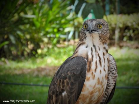 portraits philippine eagle 4
