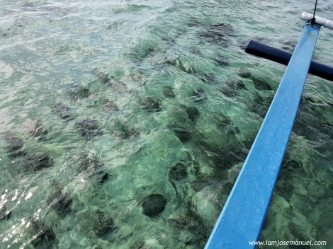 The shadows on the water are actually living clams, around 12 to 18 inches in width. Some even grow bigger on deeper water.  There are 3500++ number of living clams in this sanctuary,for conservation.
