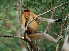 Photo by Borneo Safari Tours
